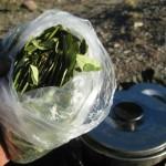 Coca leafs